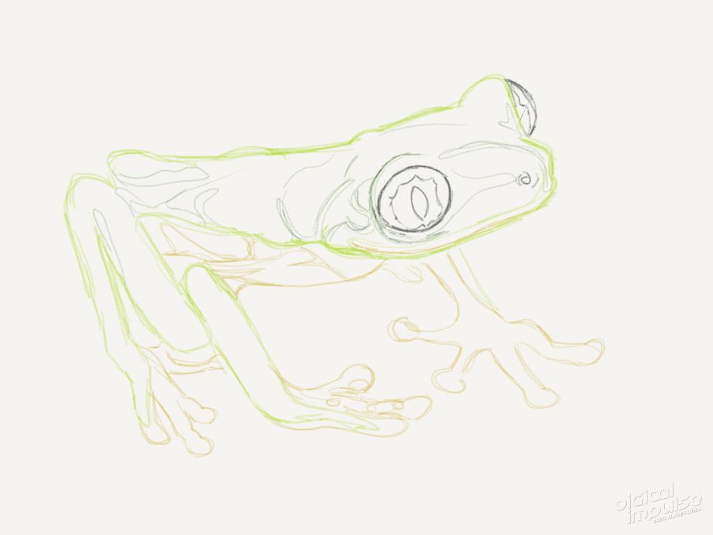 Lemur Leaf Frog 001 Image