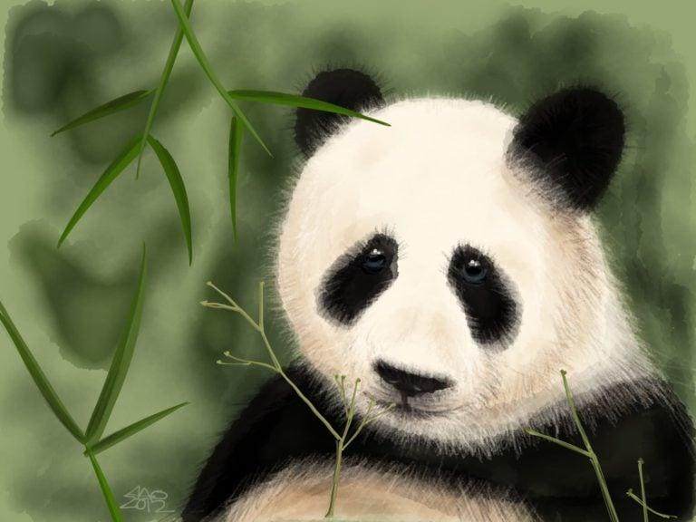 Sad Panda image