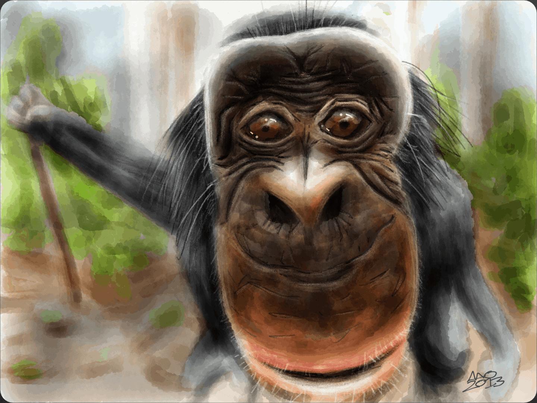 Bobo the Bonobo 11 image