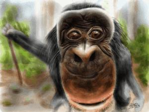 Bobo the Bonobo image