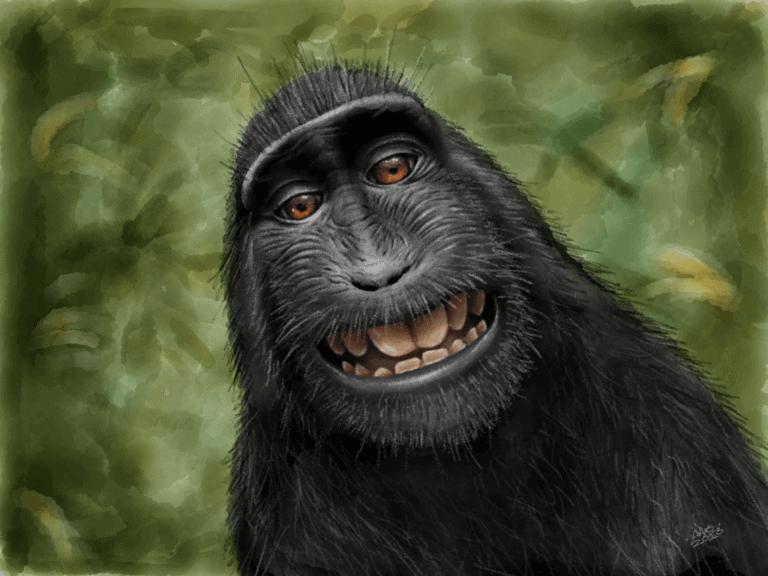 Macaca Nigra (Black Crested Macaque) image