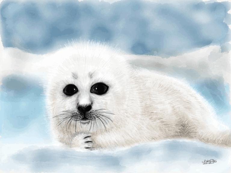 Harp Seal Pup image
