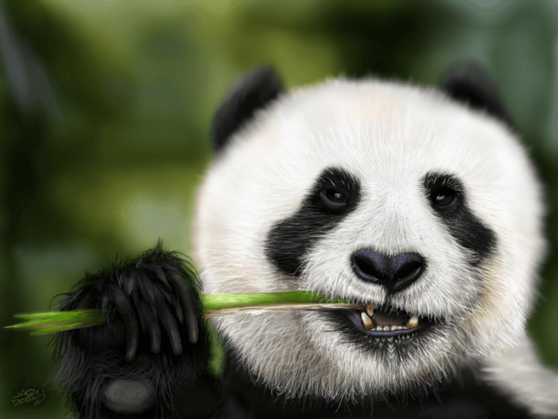 Munching Panda image