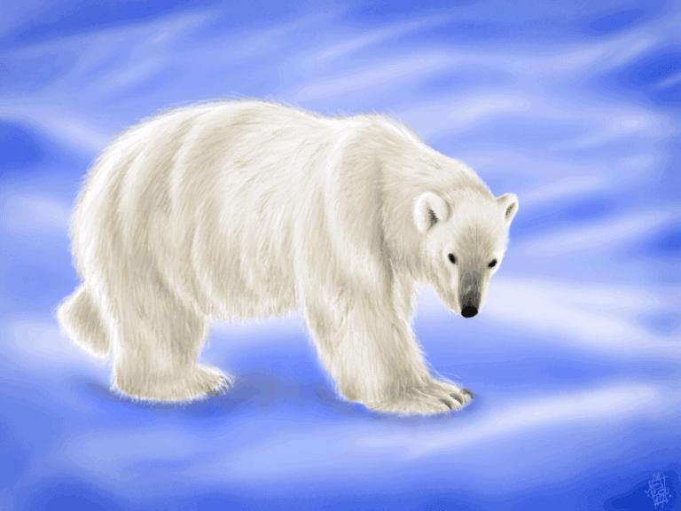 Ursus Maritimus (Polar Bear) image