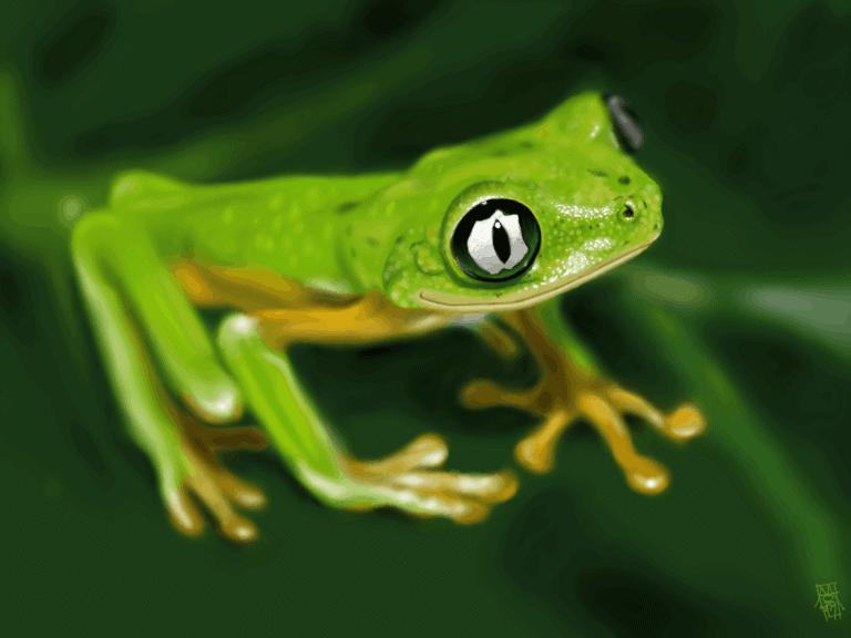 Lemur Leaf Frog (Hylomantis lemur) images