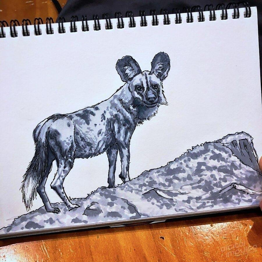 African Wild Dog 003 Image