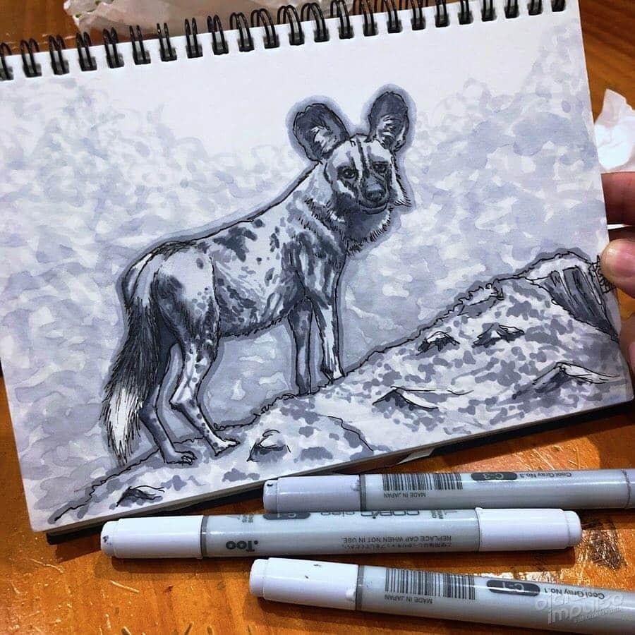 African Wild Dog 004 Image