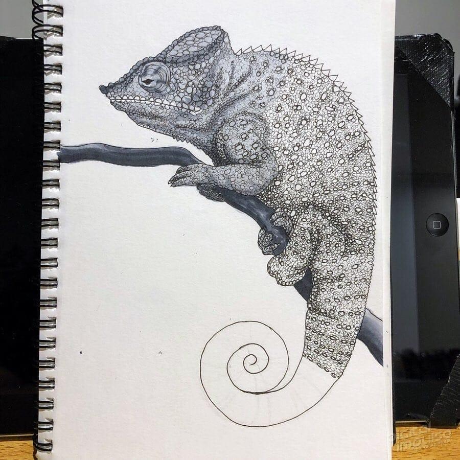 Panther Chameleon 005 Image
