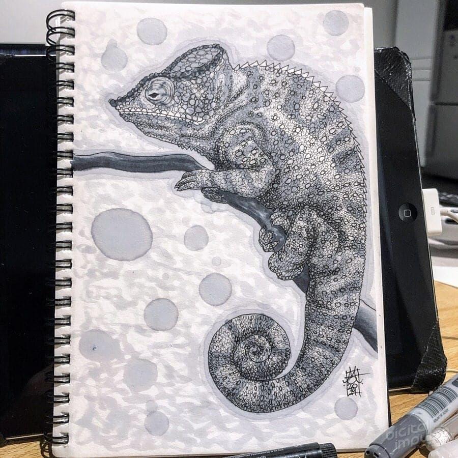 Panther Chameleon 008 Image