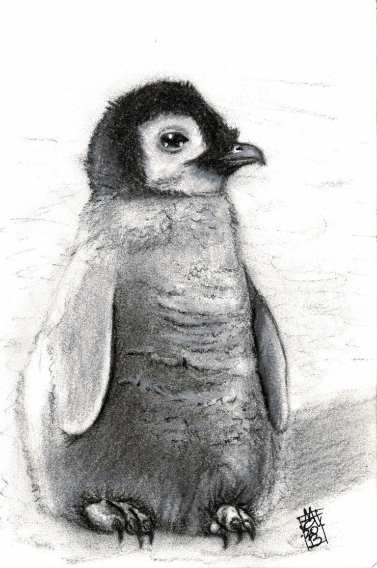 Baby Penguin (11-12-2018)