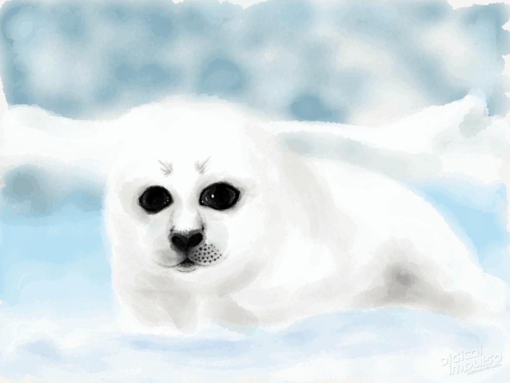Harp Seal Pup 002 Image