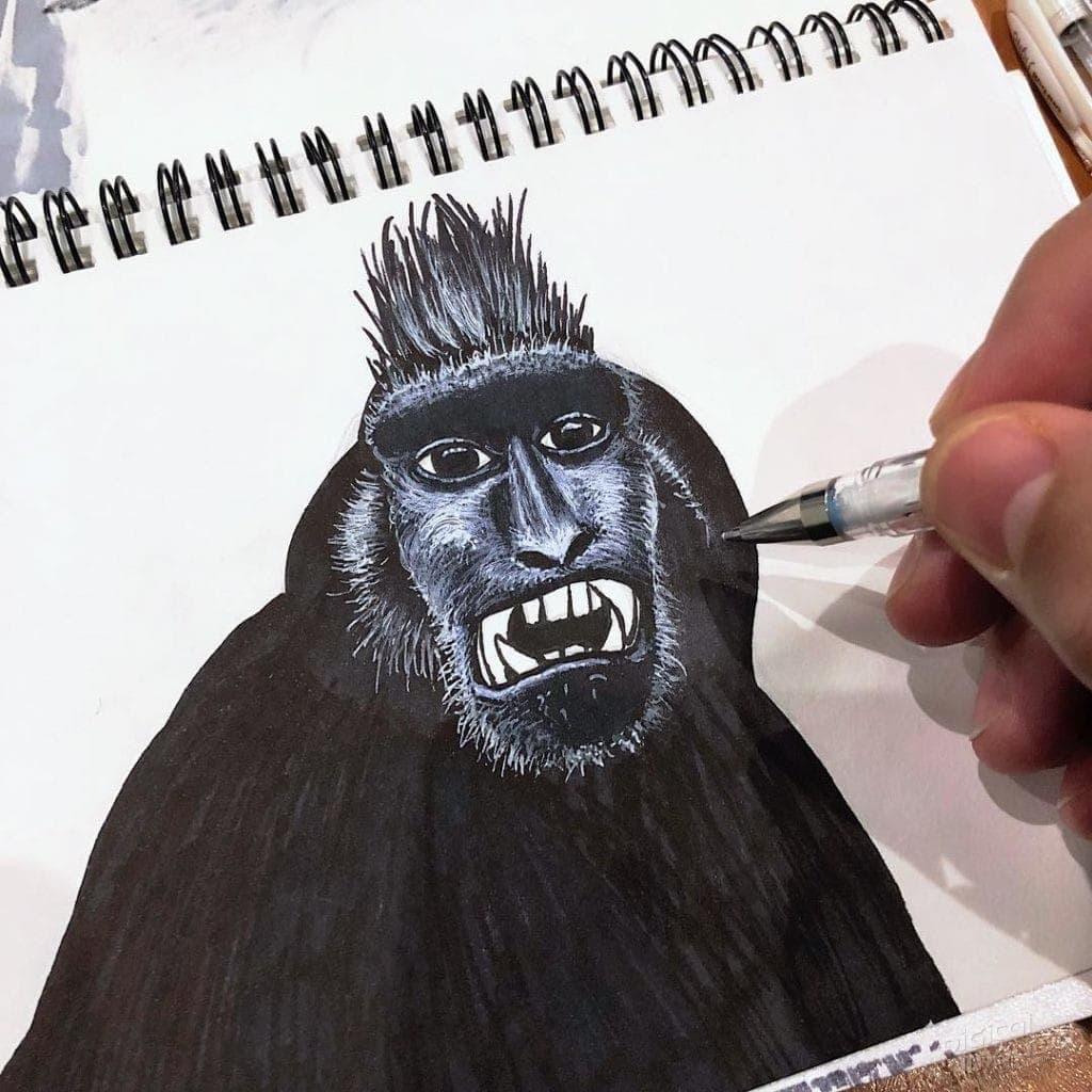 Black Macaque 002 Image