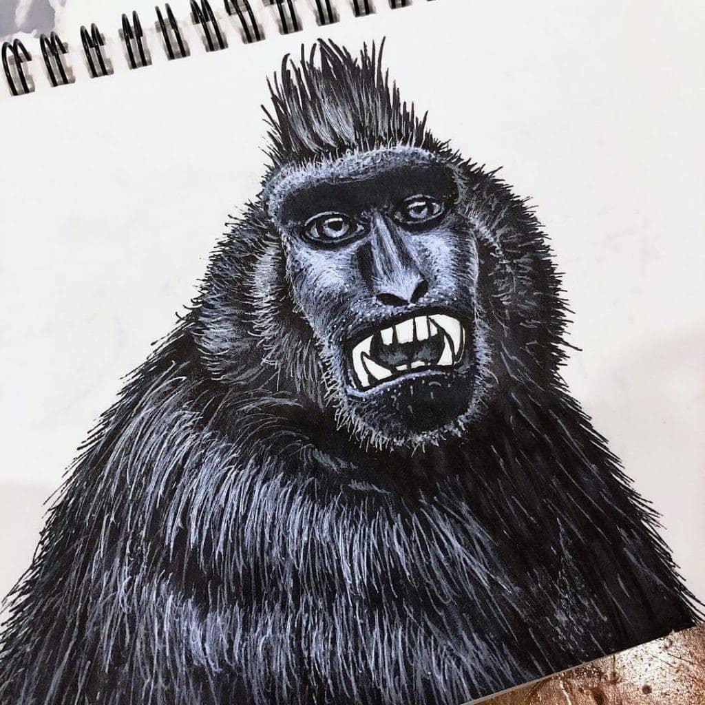 Black Macaque 003 Image