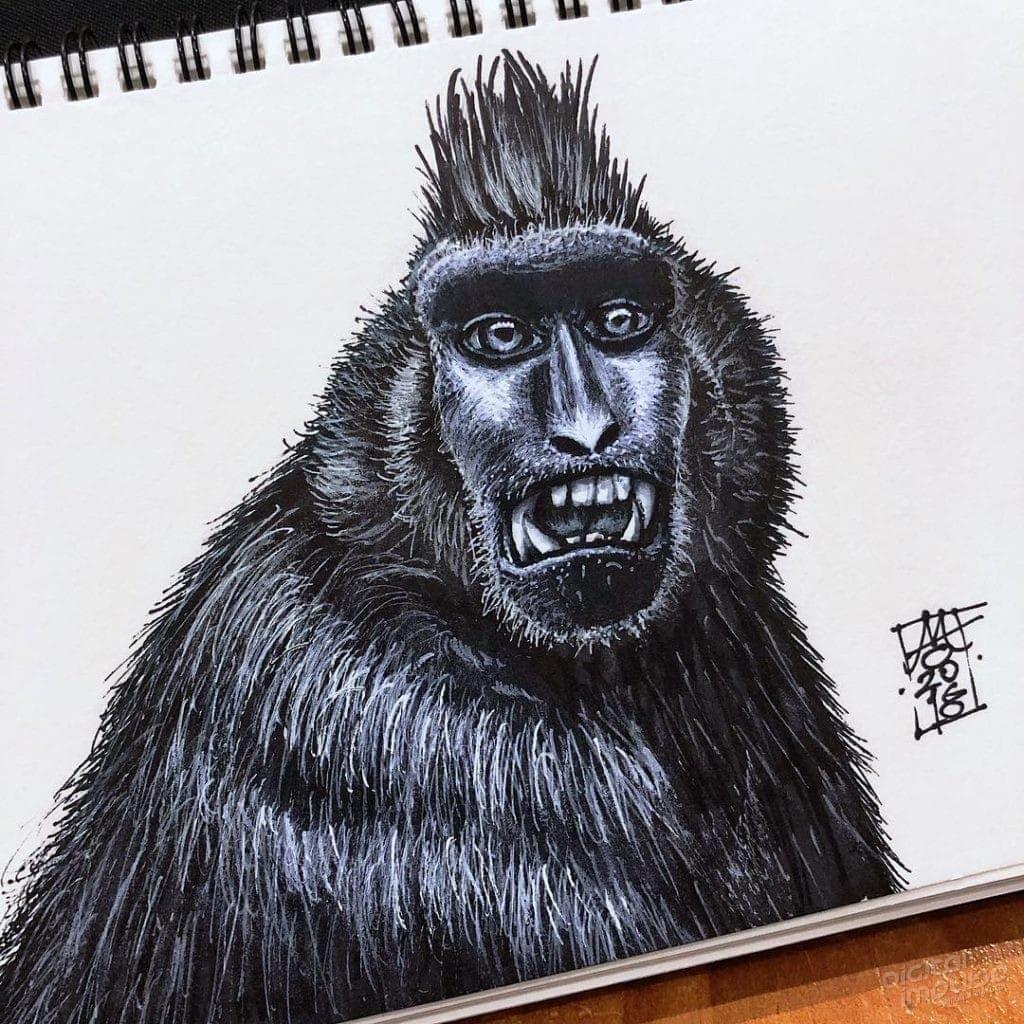 Black Macaque 004 Image