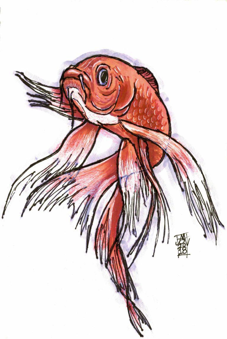 Goldfish (18-10-2018)