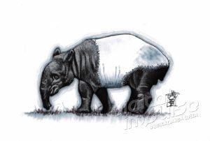 Malayan Tapir (30-10-2018)