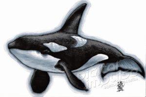 Orca (29-10-2018)