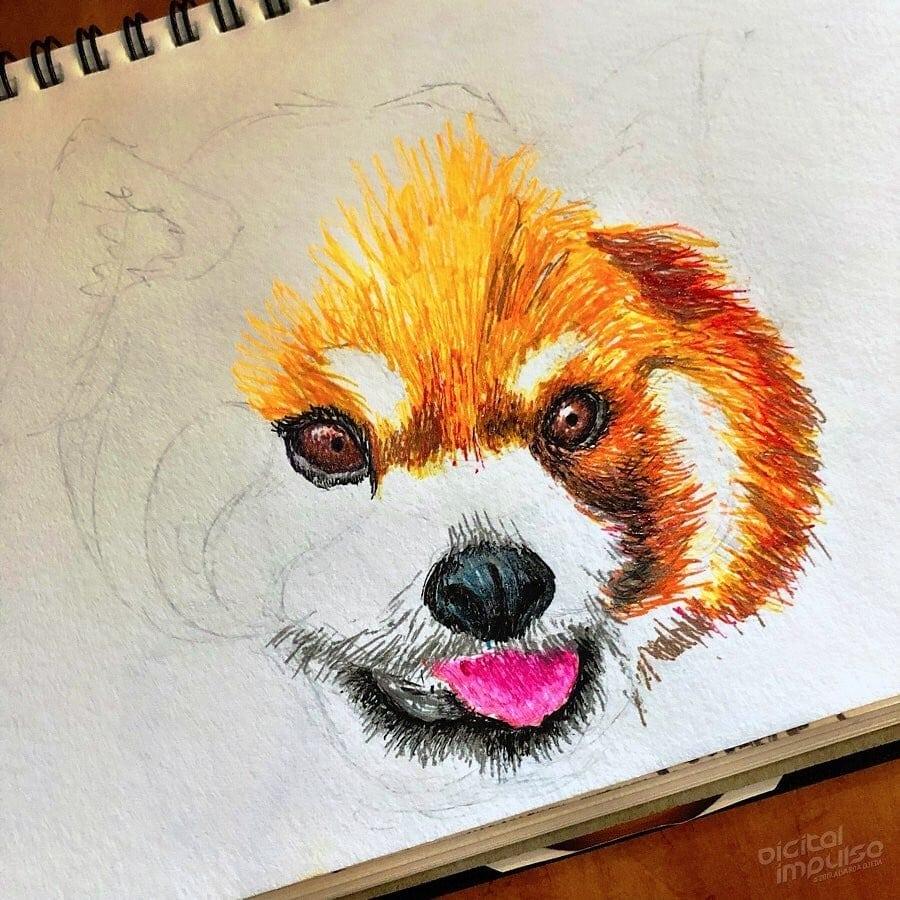 Red Panda 001 Image