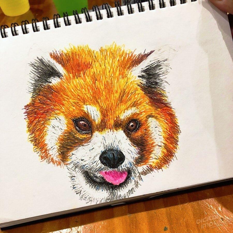 Red Panda 003 Image