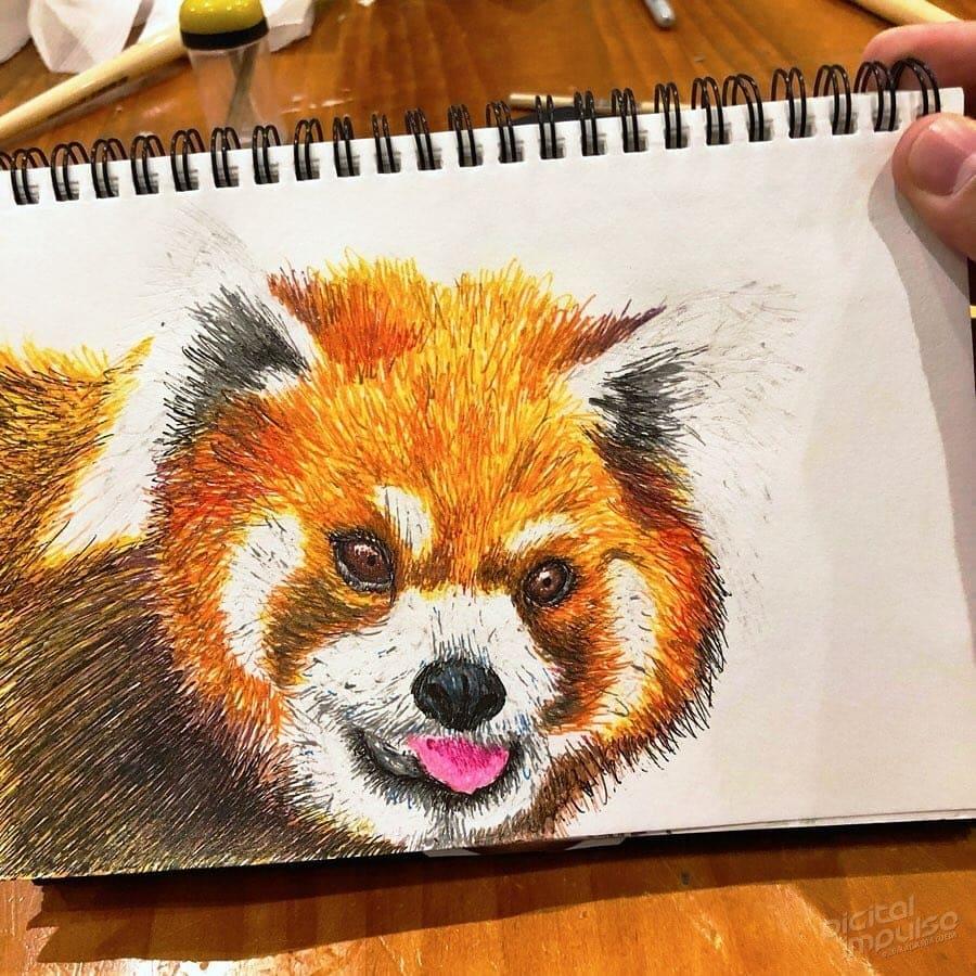 Red Panda 004 Image