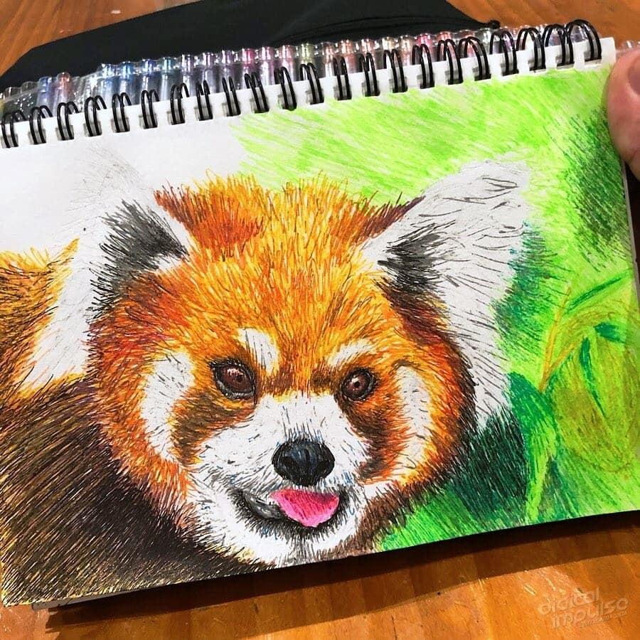 Red Panda 005 Image