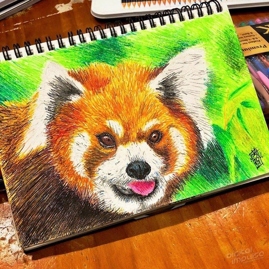 Red Panda 006 Image