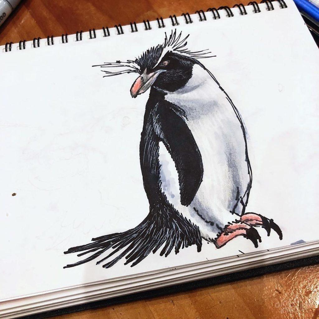 Rockhopper Penguin 003 Image