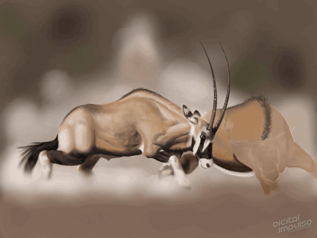 Scimitar-Horned Oryx Duel 006 Image