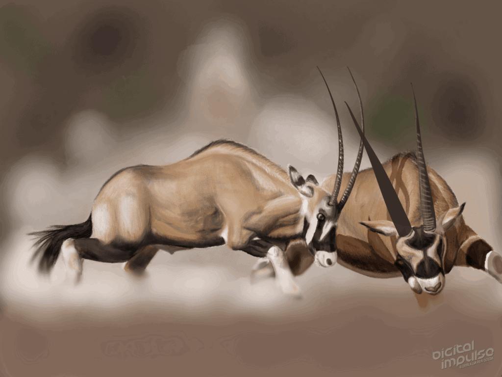 Scimitar-Horned Oryx Duel 007 Image