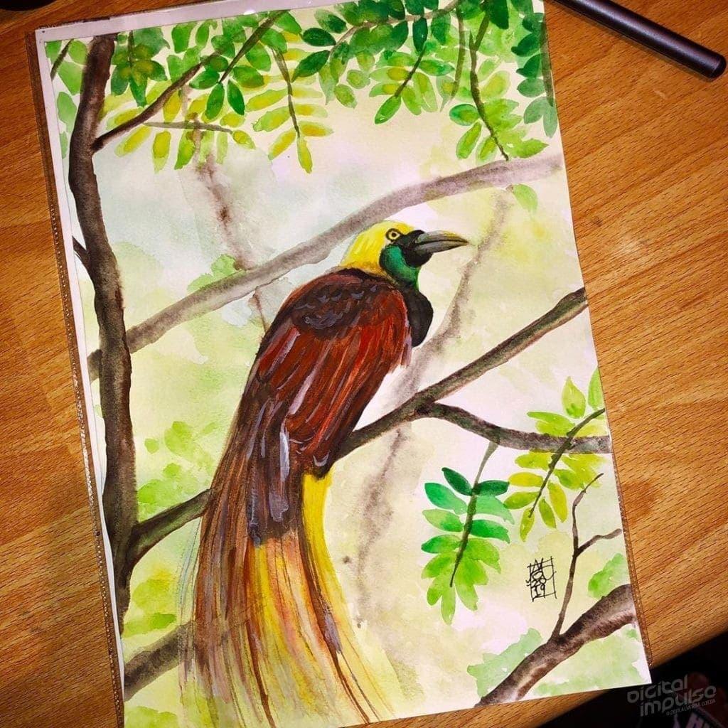 Lesser Bird of Paradise image