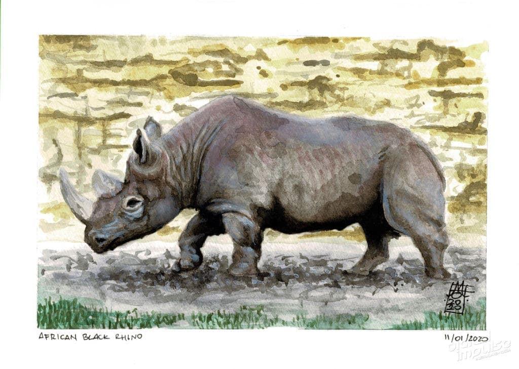 African Black Rhino image