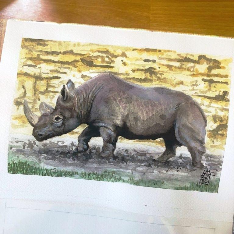African Black Rhino 08 image