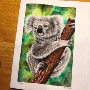 Koala 04 image