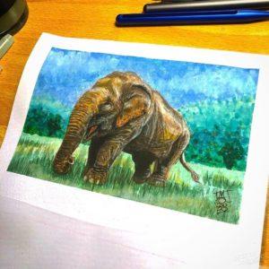Asian Elephant - 001 image