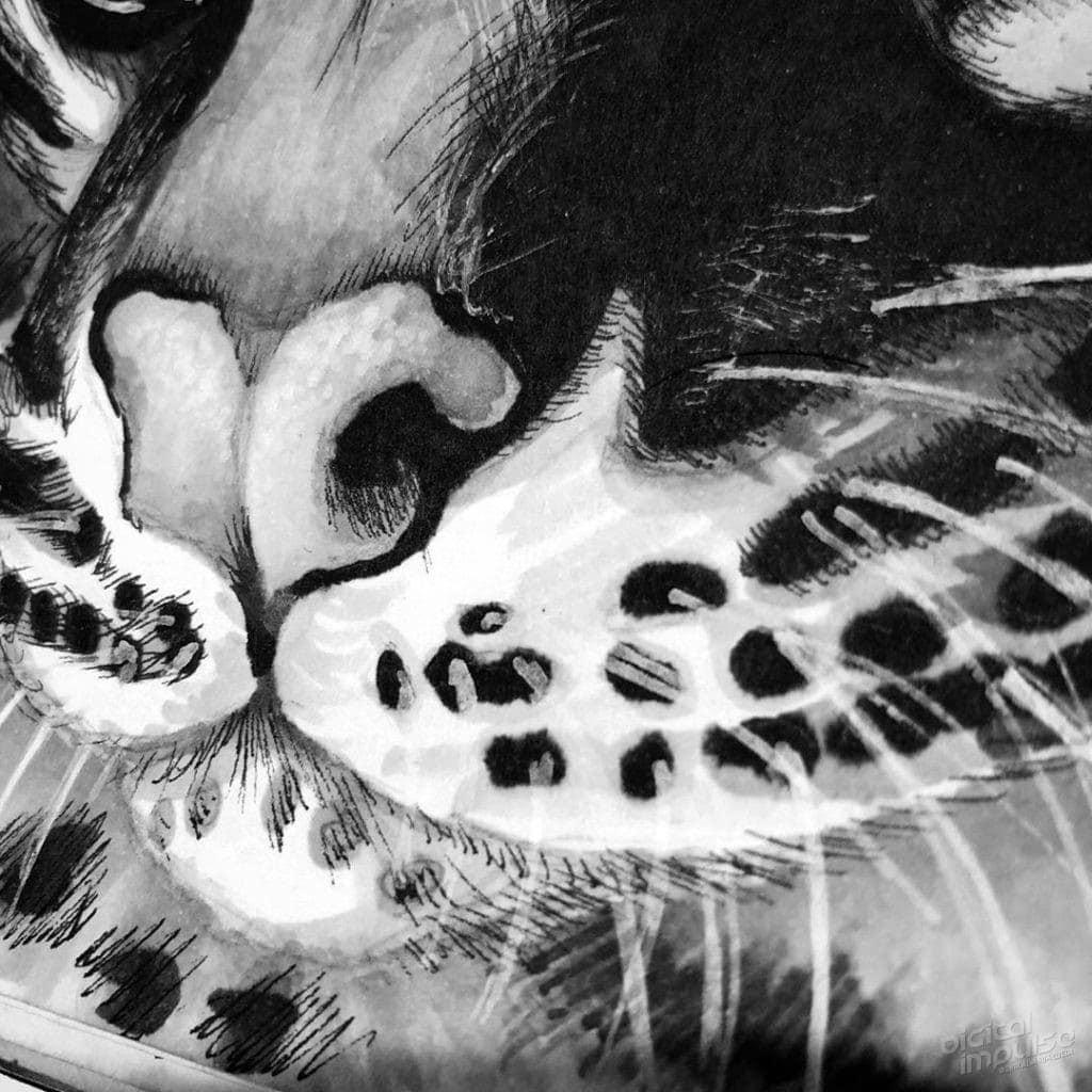 Ocelot (Leopardus pardalis) - 003 image