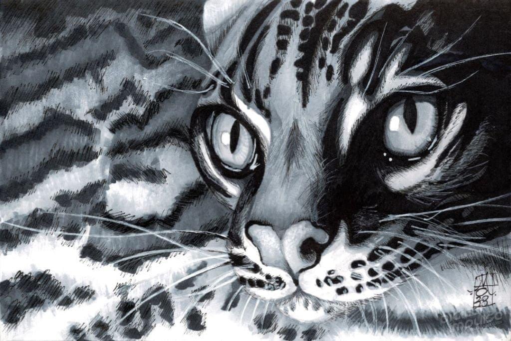 Ocelot (Leopardus pardalis) image