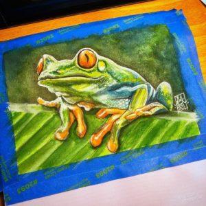 Red-Eyed Tree Frog 01 image