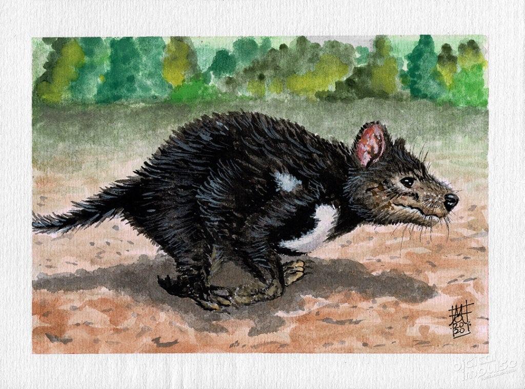 Tasmanian Devil Watercolor Preview image